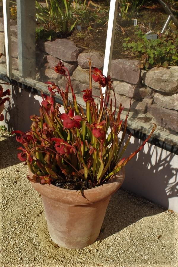 [Fil ouvert] Fleurs et plantes - Page 9 Img_2736