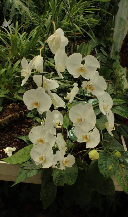 [Fil ouvert] Fleurs et plantes - Page 9 Img_2818