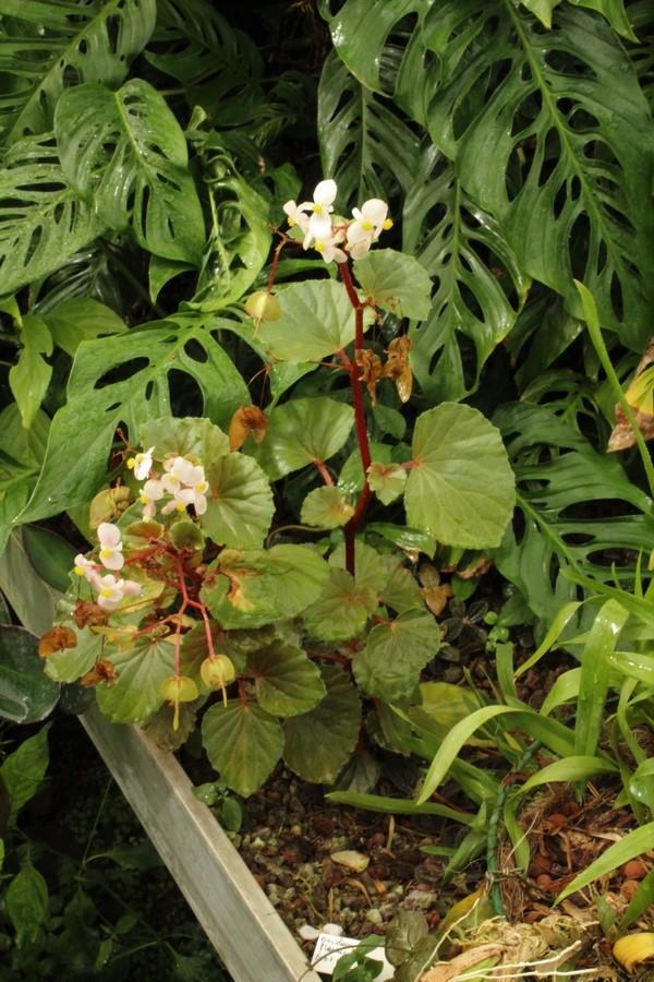 [Fil ouvert] Fleurs et plantes - Page 9 Img_2819