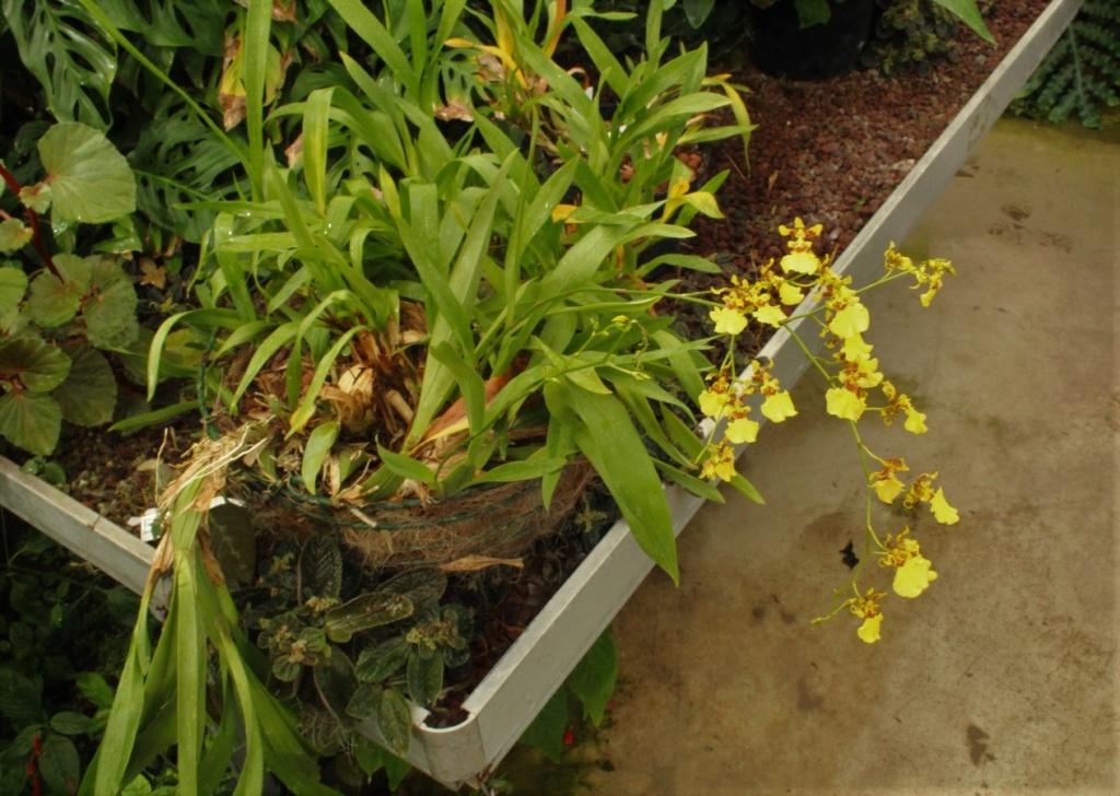 [Fil ouvert] Fleurs et plantes - Page 9 Img_2820