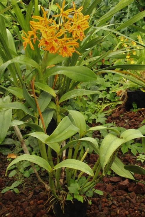 [Fil ouvert] Fleurs et plantes - Page 9 Img_2821