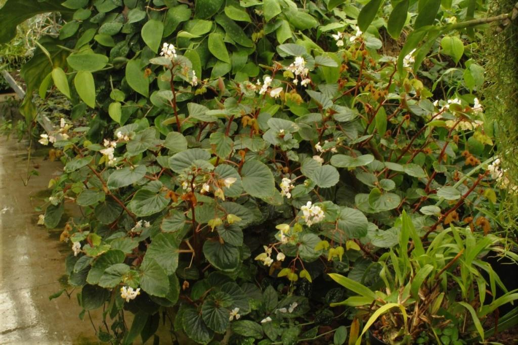 [Fil ouvert] Fleurs et plantes - Page 9 Img_2822