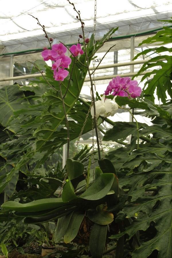 [Fil ouvert] Fleurs et plantes - Page 9 Img_2823