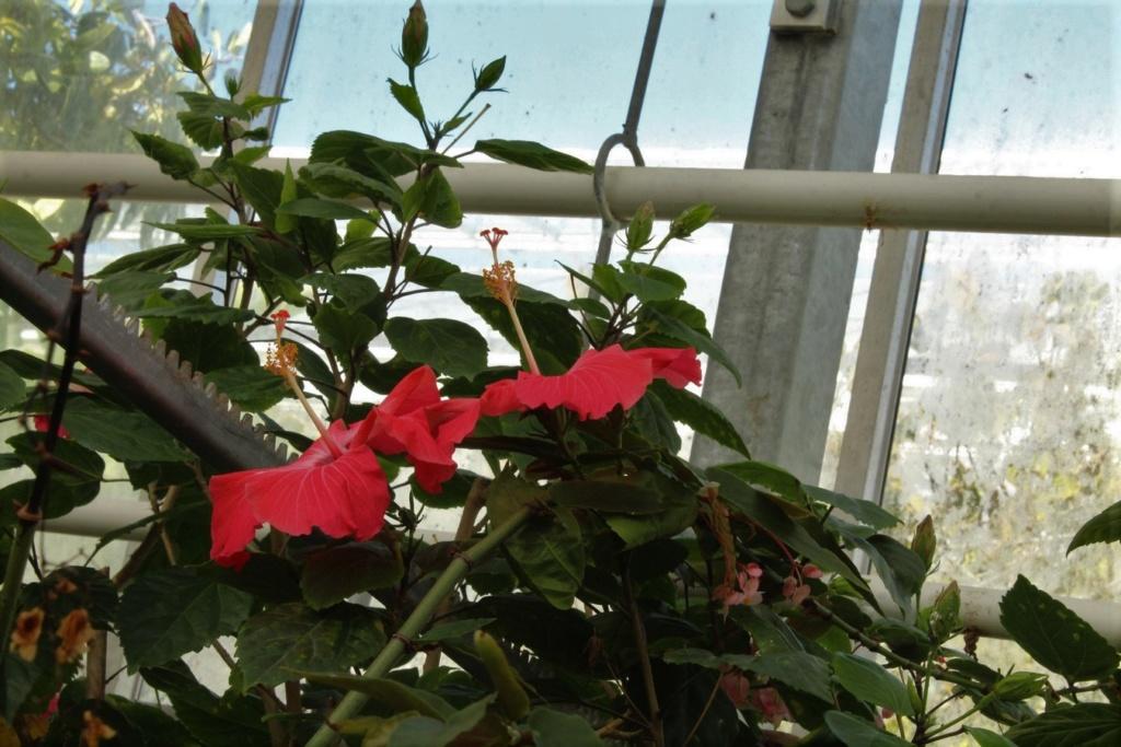[Fil ouvert] Fleurs et plantes - Page 9 Img_2825