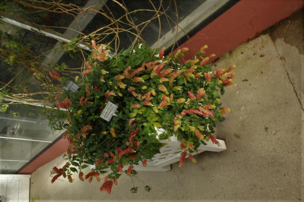 [Fil ouvert] Fleurs et plantes - Page 9 Img_2826