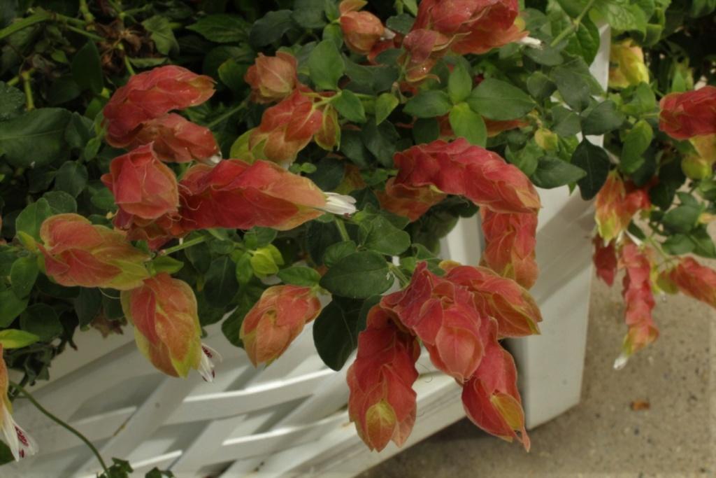 [Fil ouvert] Fleurs et plantes - Page 9 Img_2827