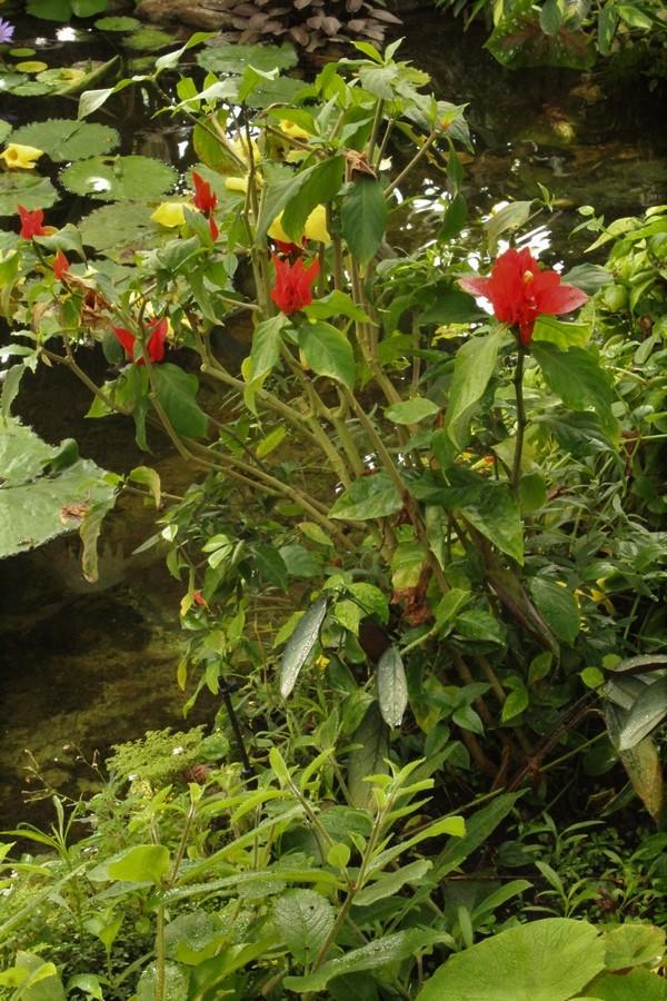 [Fil ouvert] Fleurs et plantes - Page 9 Img_2835
