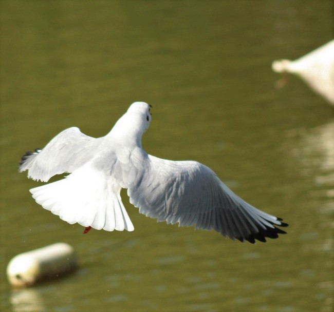 [Ouvert] FIL - Oiseaux. - Page 17 Img_3121