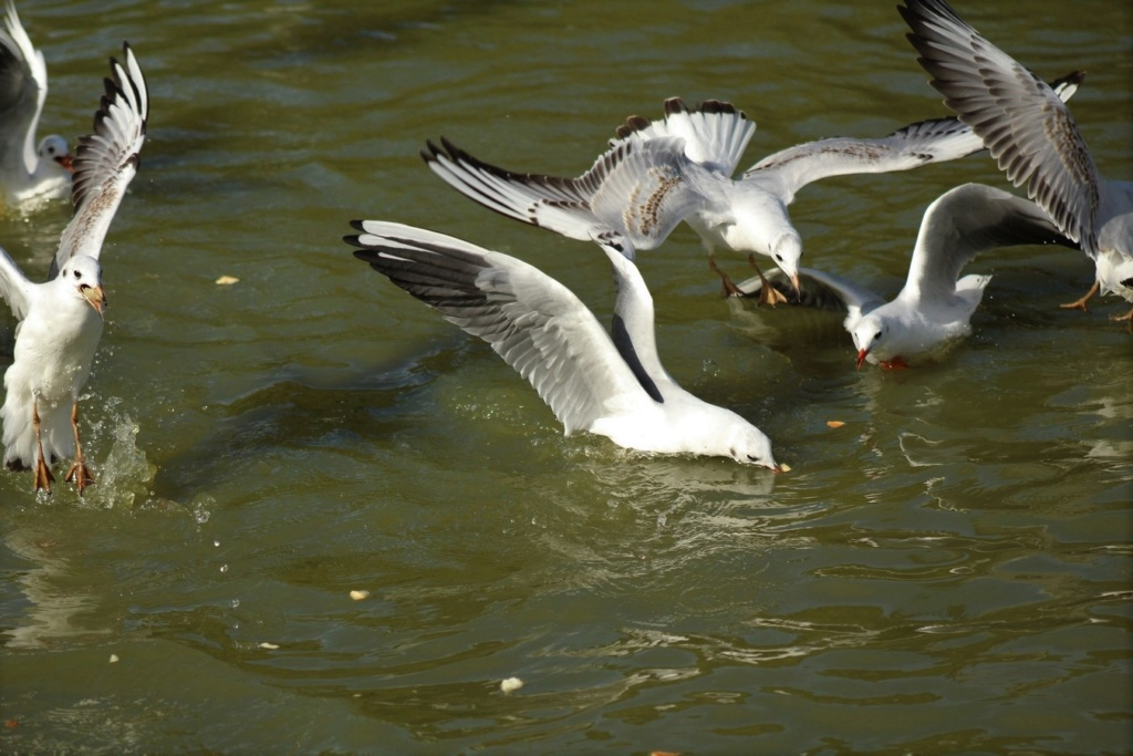 [Ouvert] FIL - Oiseaux. - Page 17 Img_3122