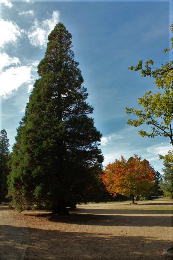L'automne en ville Img_3128