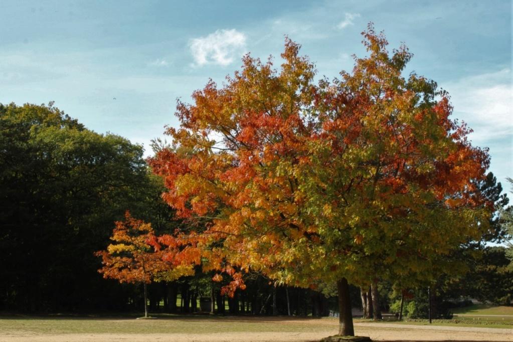 L'automne en ville Img_3129
