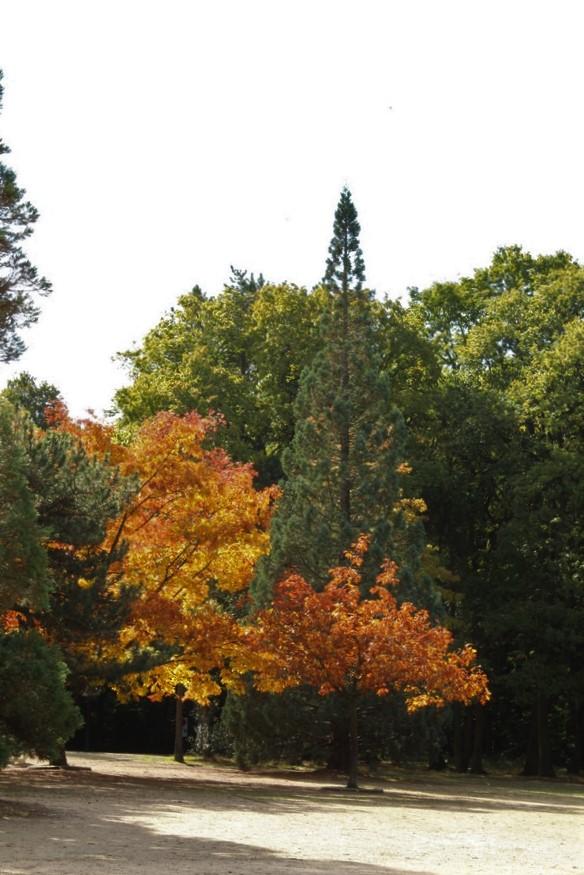 L'automne en ville Img_3130