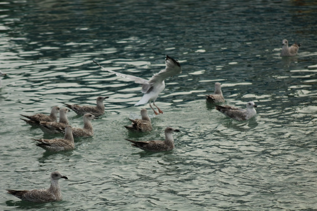 [Ouvert] FIL - Oiseaux. - Page 18 Img_3323