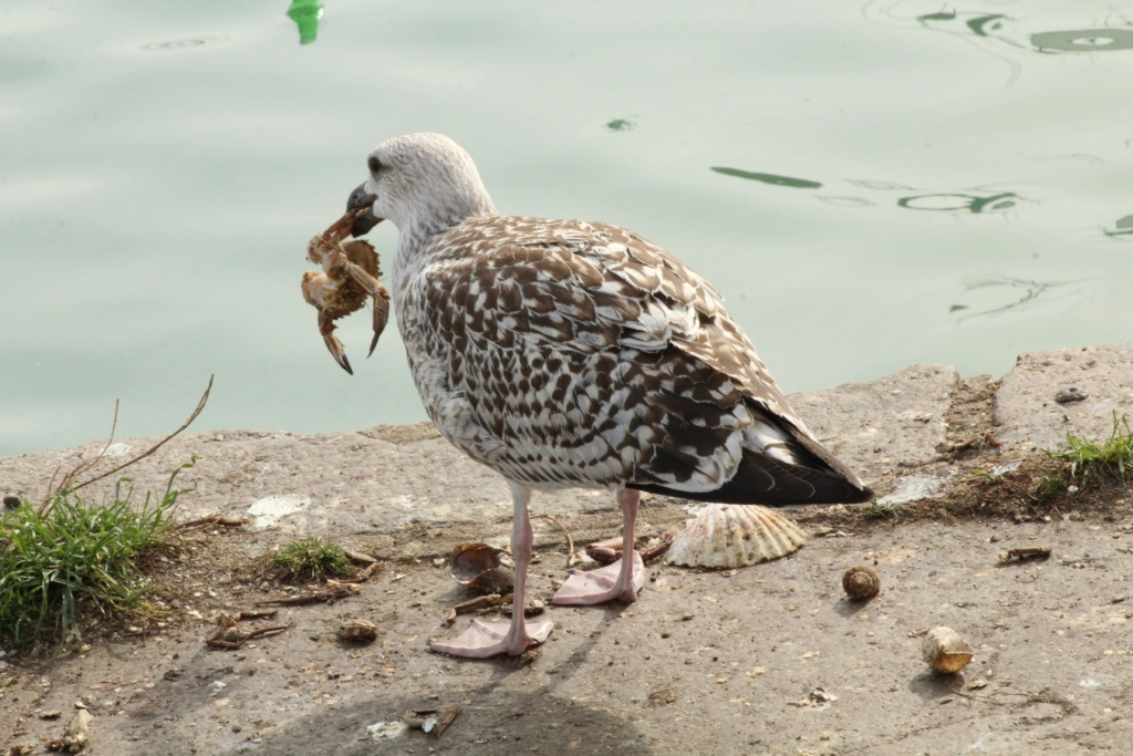 [Ouvert] FIL - Oiseaux. - Page 18 Img_3411