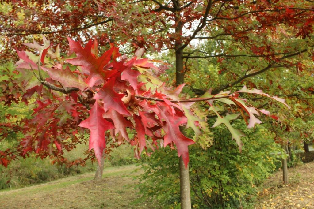 L'automne en ville - Page 2 Img_3514
