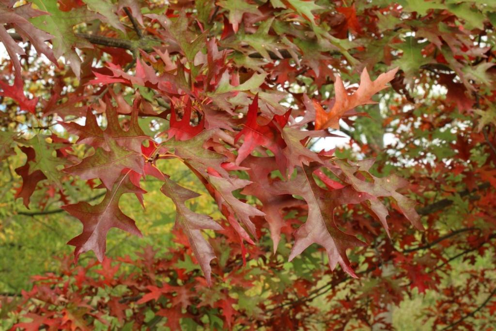 L'automne en ville - Page 2 Img_3515