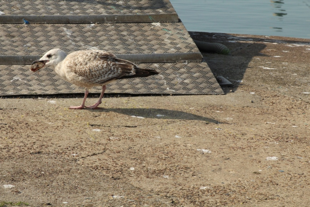 [Ouvert] FIL - Oiseaux. - Page 18 Img_3516