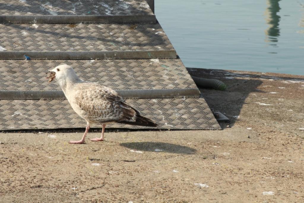 [Ouvert] FIL - Oiseaux. - Page 18 Img_3517