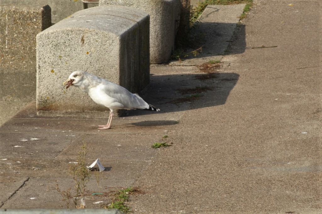[Ouvert] FIL - Oiseaux. - Page 18 Img_3518