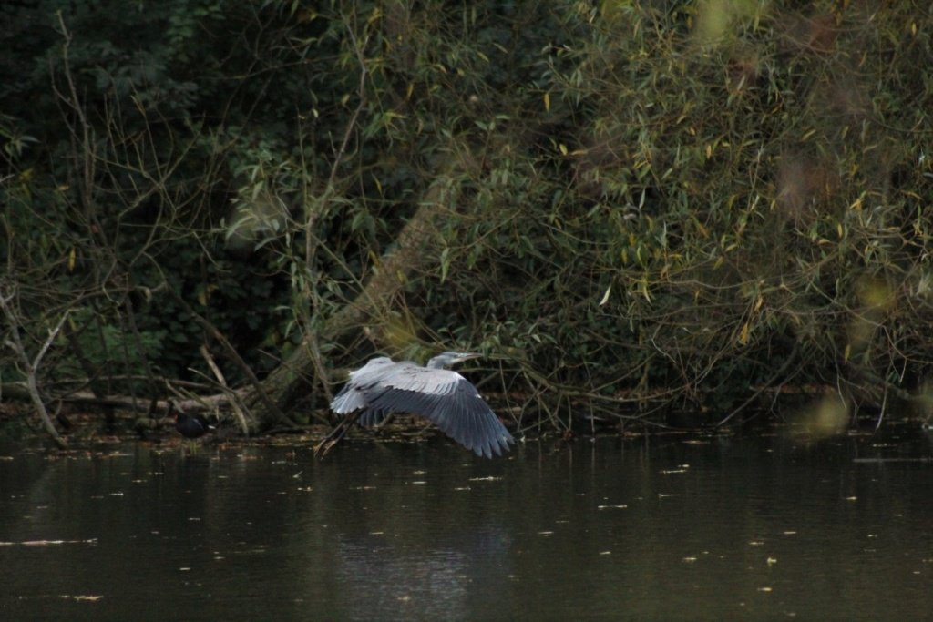 [Ouvert] Animaux divers. - Page 23 Img_3620