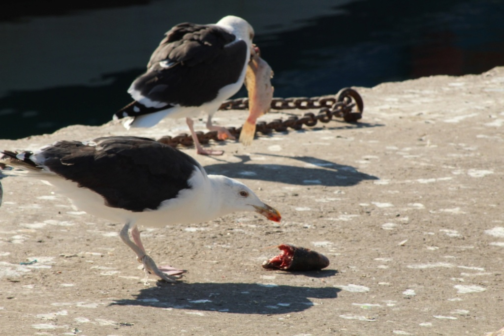 [Ouvert] FIL - Oiseaux. - Page 18 Img_3713