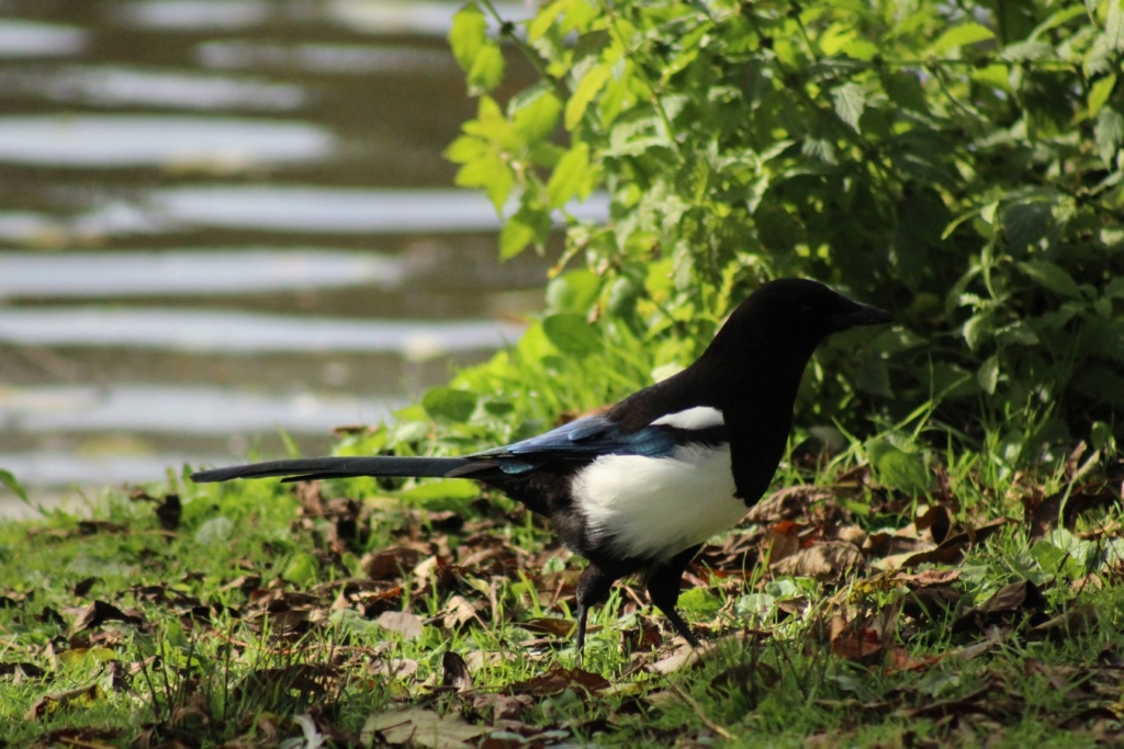 [Ouvert] FIL - Oiseaux. - Page 18 Img_3817