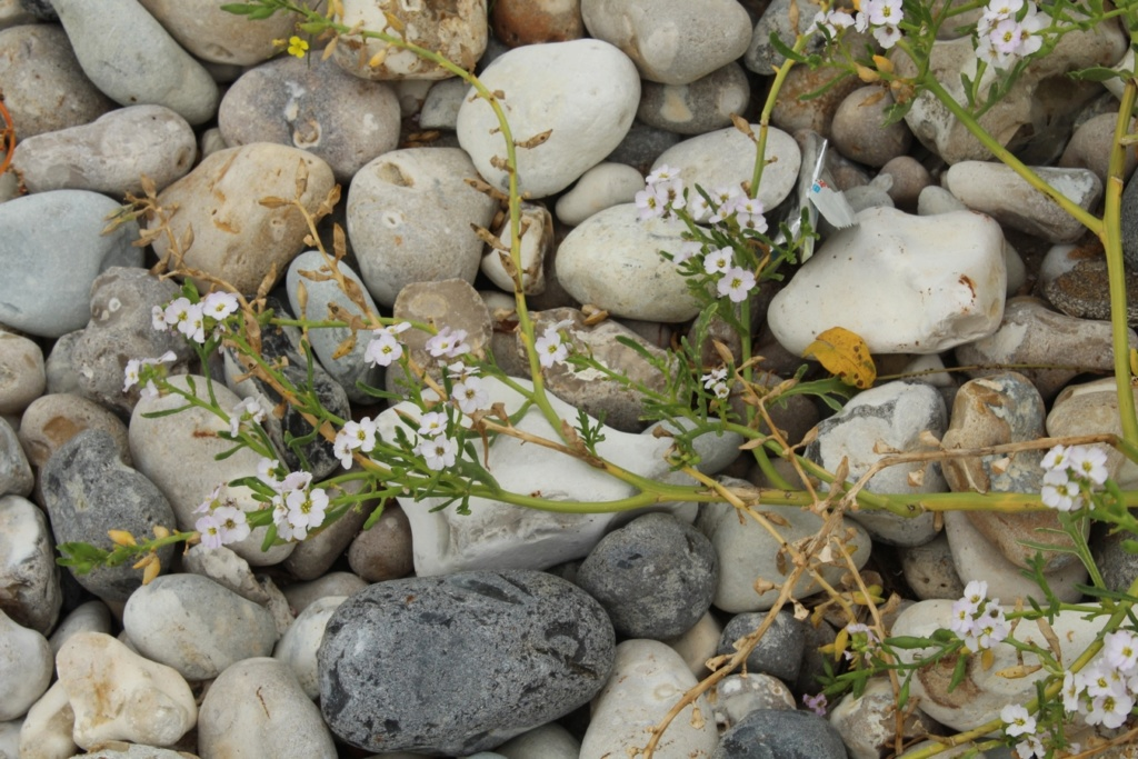 [Fil ouvert] Fleurs et plantes - Page 9 Img_3912