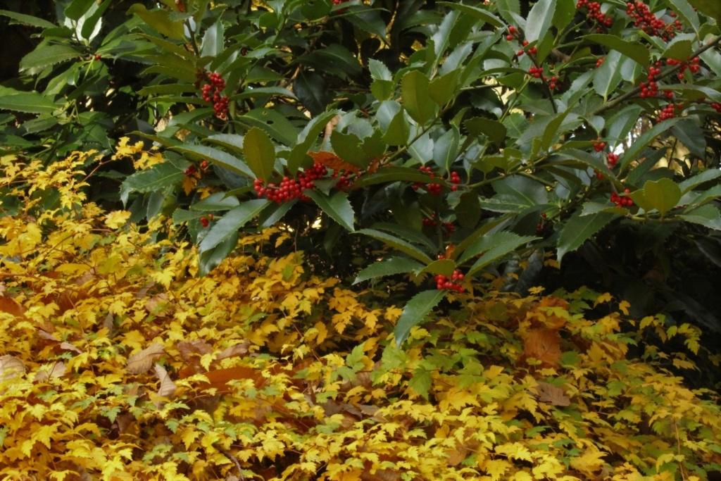 [Fil ouvert] Fruit sur l'arbre - Page 11 Img_4222