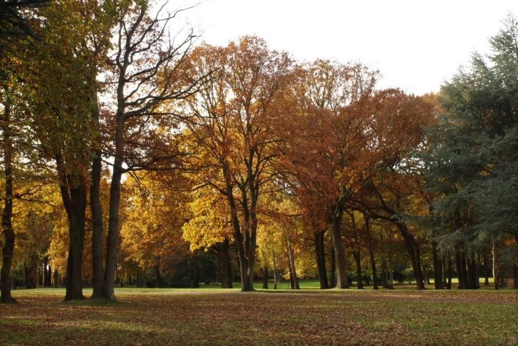 L'automne en ville - Page 2 Img_4312