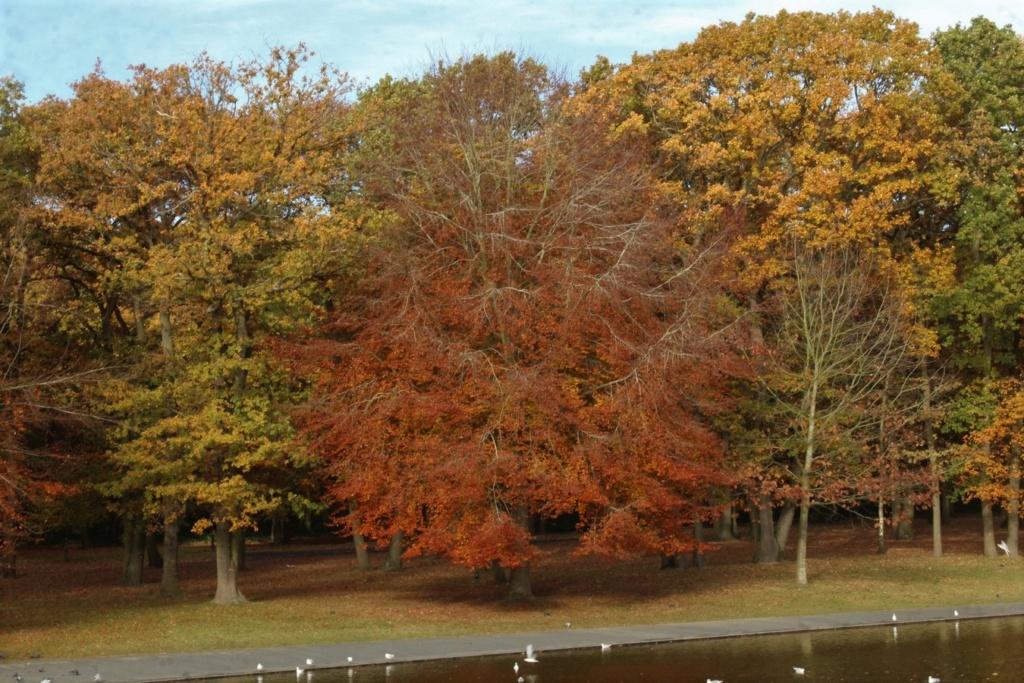 L'automne en ville - Page 2 Img_4313