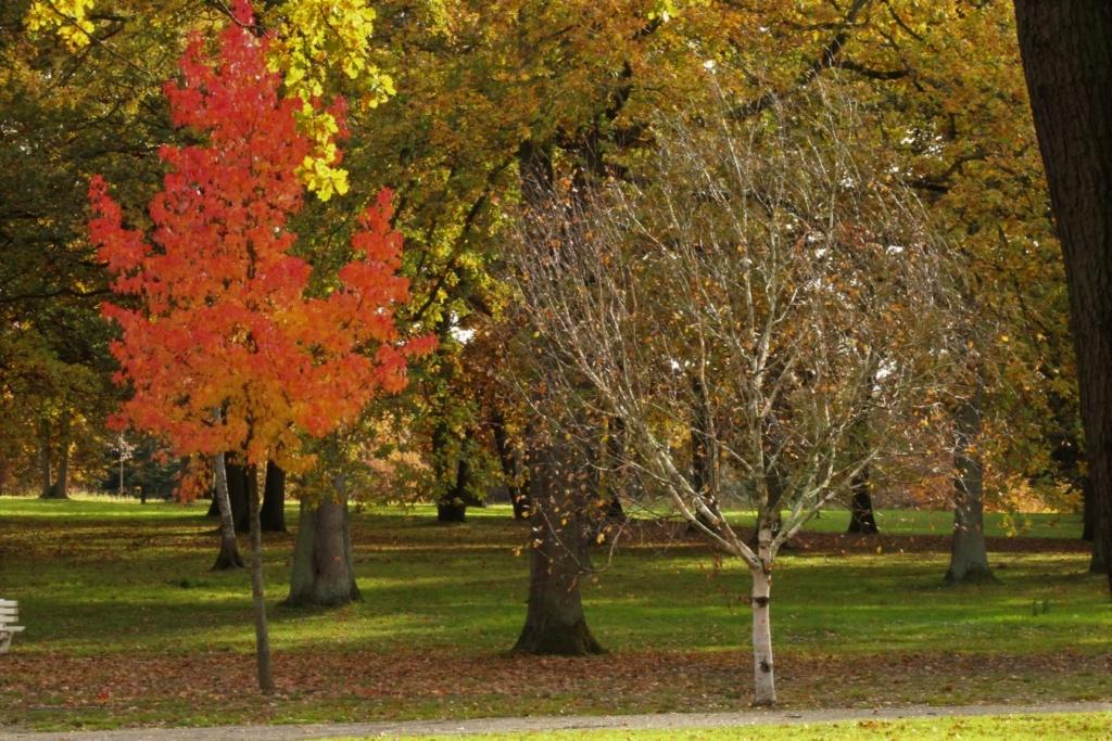 L'automne en ville - Page 2 Img_4314