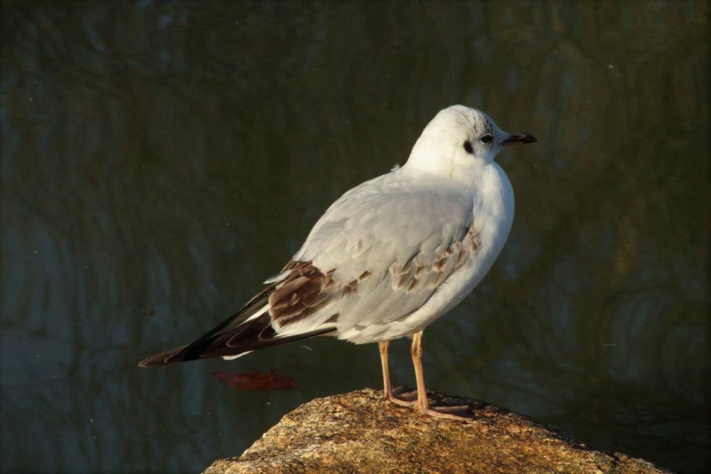 [Ouvert] FIL - Oiseaux. - Page 19 Img_4520