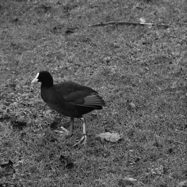 [Ouvert] FIL - Oiseaux. - Page 19 Img_4711