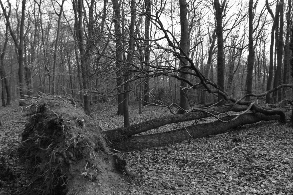 [fil ouvert] la forêt dans tous ses états - Page 24 Img_5226