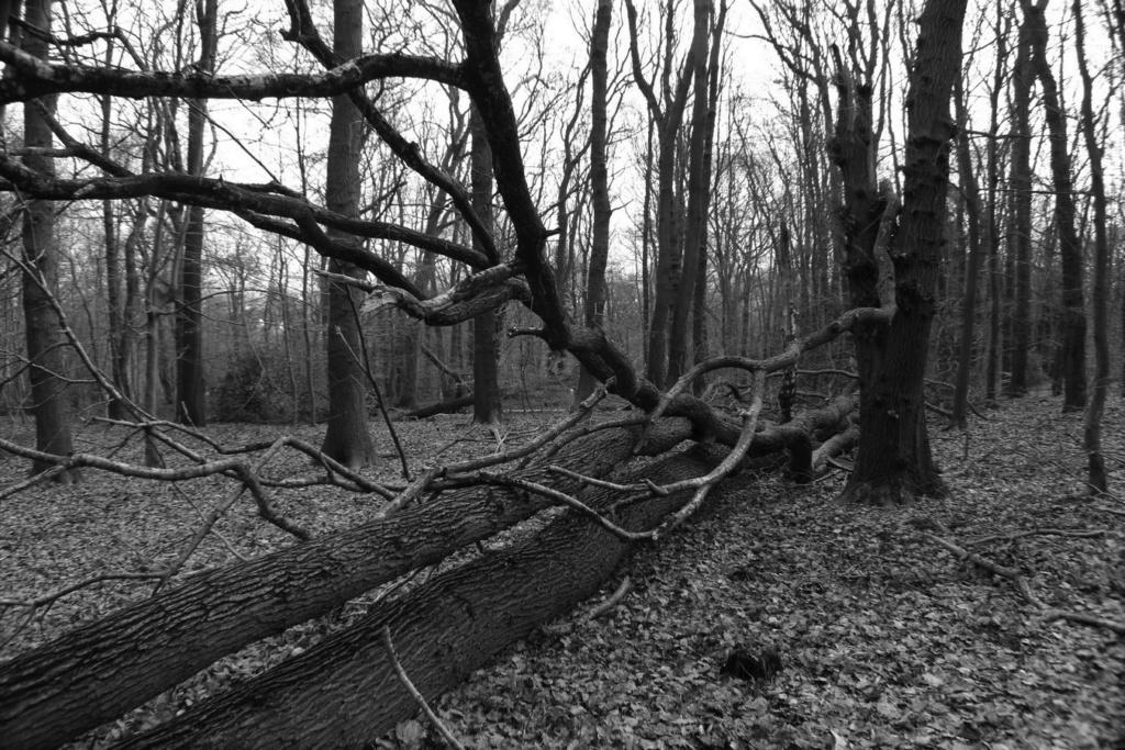 [fil ouvert] la forêt dans tous ses états - Page 24 Img_5227