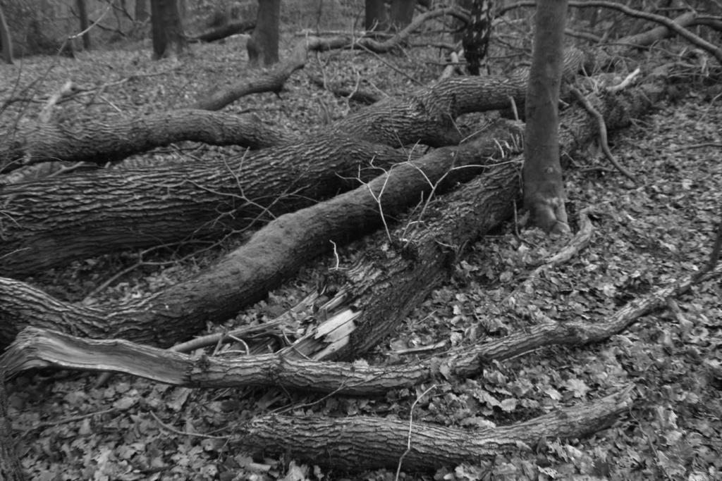 [fil ouvert] la forêt dans tous ses états - Page 24 Img_5228