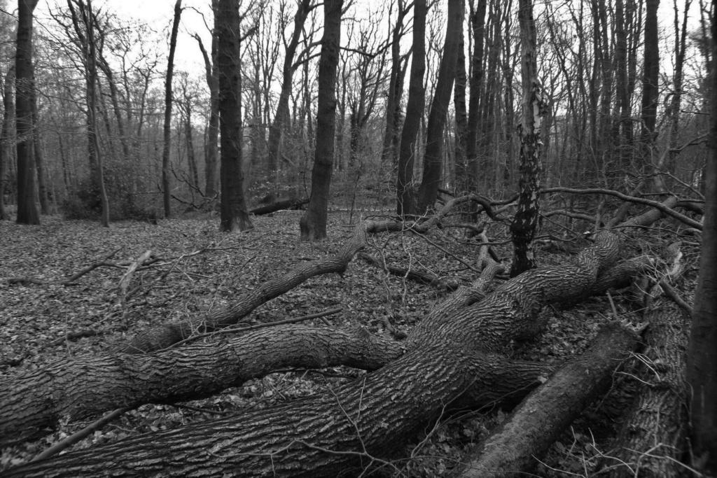 [fil ouvert] la forêt dans tous ses états - Page 24 Img_5229