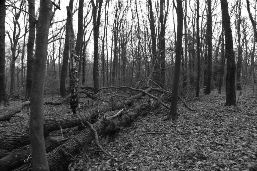[fil ouvert] la forêt dans tous ses états - Page 24 Img_5230