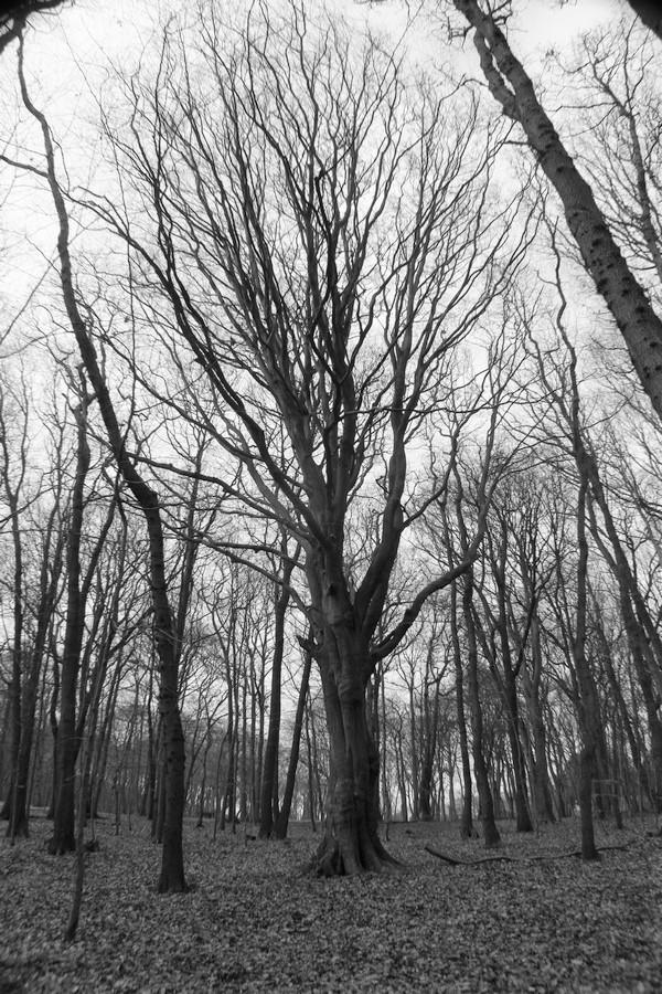 [fil ouvert] la forêt dans tous ses états - Page 24 Img_5241
