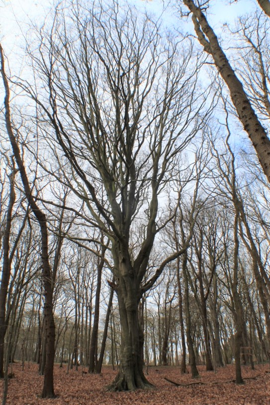 [fil ouvert] la forêt dans tous ses états - Page 24 Img_5242