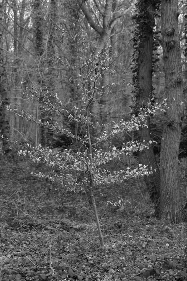 [fil ouvert] la forêt dans tous ses états - Page 24 Img_5243