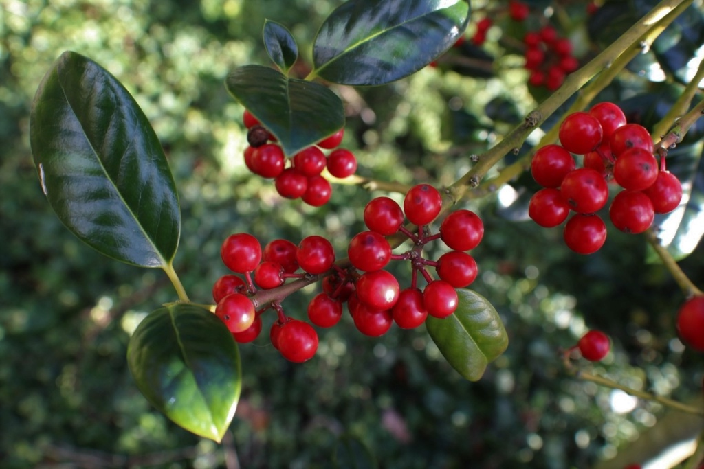 [Fil ouvert] Fruit sur l'arbre - Page 12 Img_5522