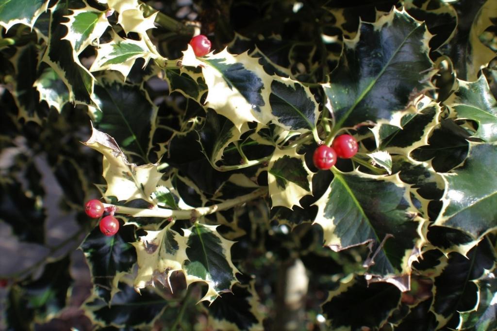[Fil ouvert] Fruit sur l'arbre - Page 12 Img_5523