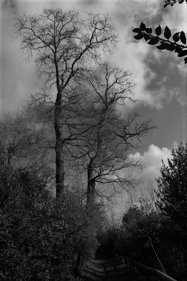 [fil ouvert] la forêt dans tous ses états - Page 24 Img_5524