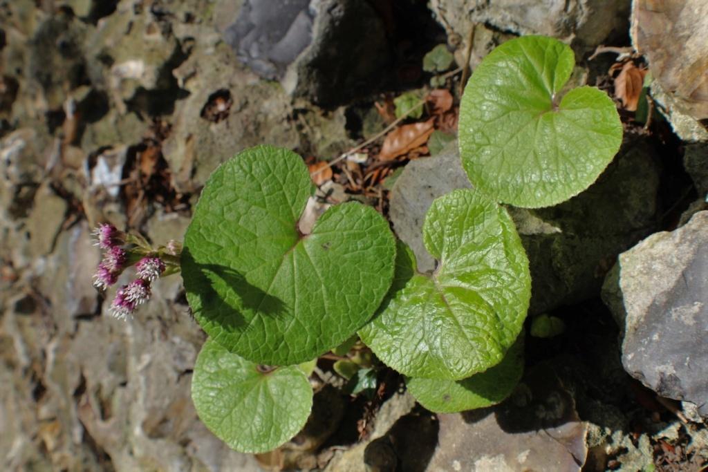 [Fil ouvert] Fleurs et plantes - Page 10 Img_5529