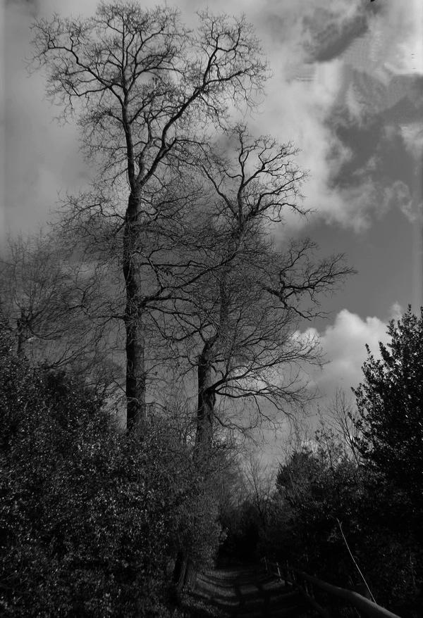 [fil ouvert] la forêt dans tous ses états - Page 24 Img_5531
