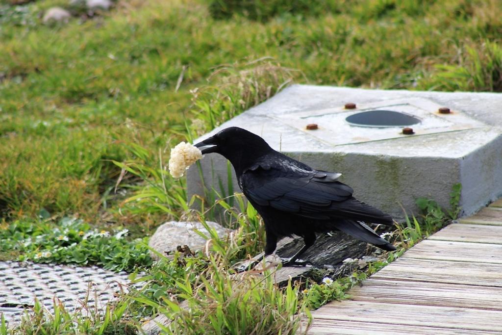 [Ouvert] FIL - Oiseaux. Img_5542