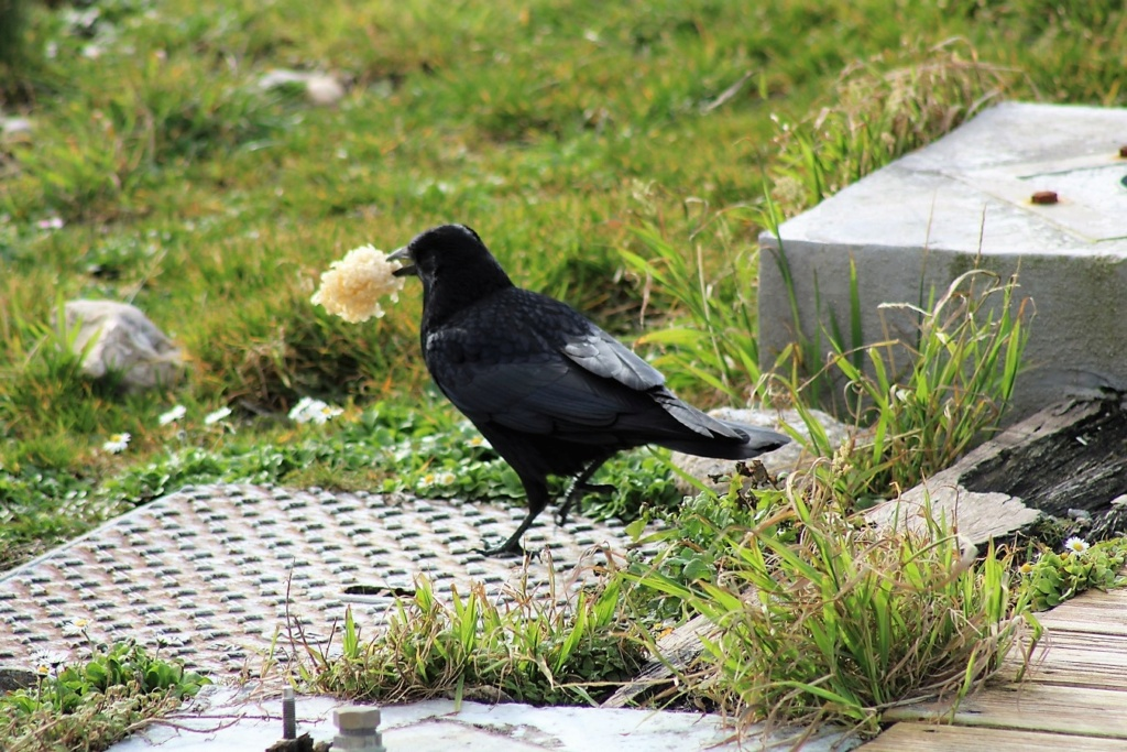 [Ouvert] FIL - Oiseaux. Img_5543