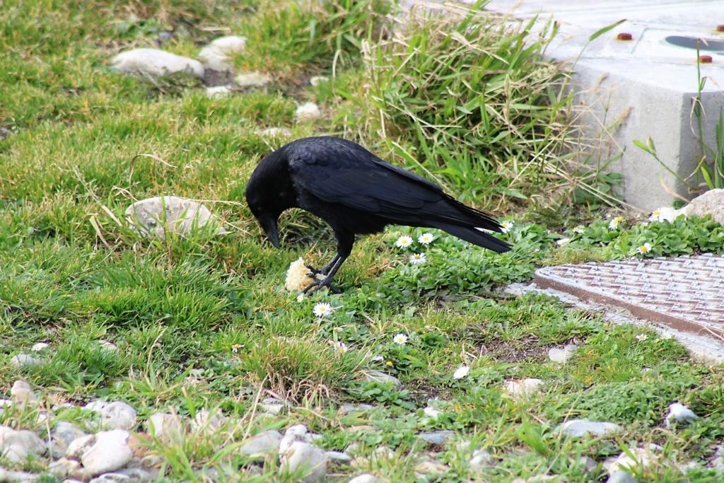[Ouvert] FIL - Oiseaux. Img_5544