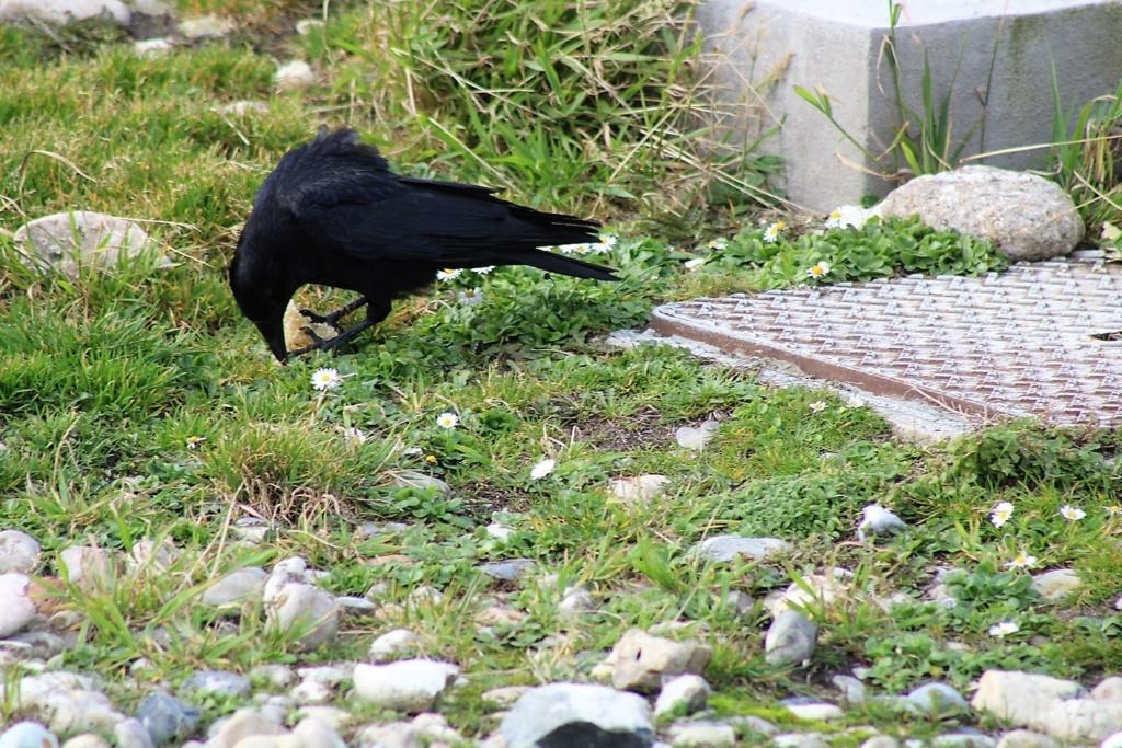 [Ouvert] FIL - Oiseaux. Img_5545